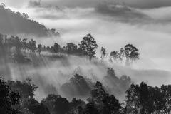 Mist die boom op de berg behandelen met zonlicht Stock Foto