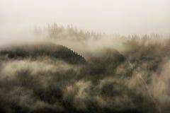 Mist die de bergbossen behandelen met lage wolk in Juneau Alaska voor mistlandschap Royalty-vrije Stock Foto's