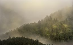 Mist die de bergbossen behandelen met lage wolk in Juneau Alaska voor mistlandschap Stock Fotografie