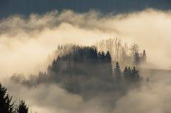 Mist die een boomeiland vormen Stock Afbeeldingen