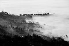 Mist die een vallei en bomen vullen Stock Foto's