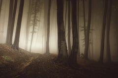 Mist door de bomen in geheimzinnig Transylvanian-bos stock foto