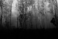 Mist. Early morning mist in the Corbett jungles Stock Photography