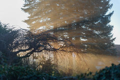 Mist of early morning Royalty Free Stock Photography
