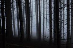 Mist in een naaldbos royalty-vrije stock afbeeldingen