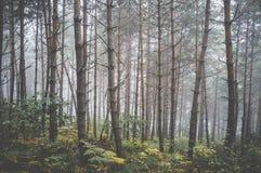 Mist en de herfst boskleuren #3 Stock Foto