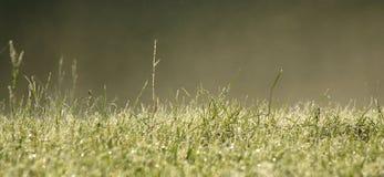 Mist en groen gras Royalty-vrije Stock Afbeelding
