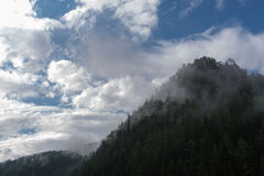 Mist en wolken over de taigaheuvel met pijnboombomen Stock Afbeelding
