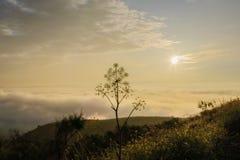 Mist en zon stock foto