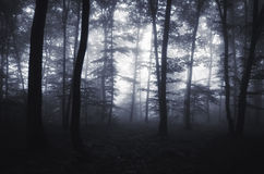 Mist in enchanted forest at night Royalty Free Stock Images