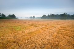 Mist on the field Royalty Free Stock Photography