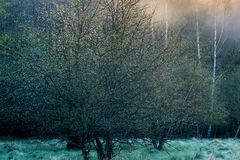 Mist in a field near forest royalty free stock images