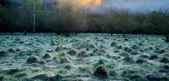 Mist in a field near forest royalty free stock photo