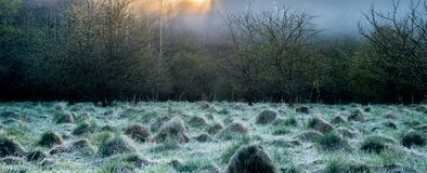 Spring dawn, nature beauty panorama. Mist in a field near forest in spring sunrise stock photo