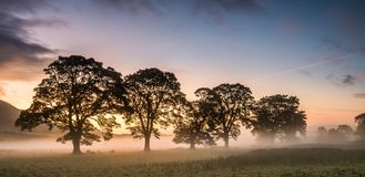 Mist in the Fields at Sunrise Stock Image