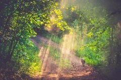 Mist and first morning light in forest stock photos
