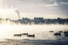 Mist fog city morning and ducks swimming in misty river royalty free stock image