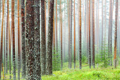 Mist forest Royalty Free Stock Photos