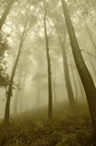 Mist in the forest Royalty Free Stock Images