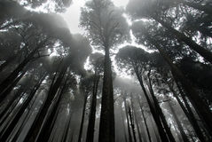 Mist in a Forest Stock Images