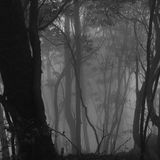 Mist forest Royalty Free Stock Image
