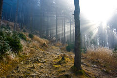 Mist in the forest. Autumn forest foothpath in slight mist Stock Images