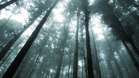 Mist forest. Forest with mist of a mountain in Taiwan Royalty Free Stock Images