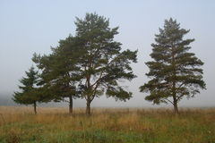 Mist in the forest. Mist in the autumn forest. Moscow region, 2006 Royalty Free Stock Photos