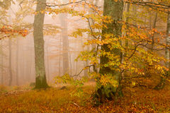 Mist in forest royalty free stock image