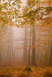 Mist in forest Stock Photo