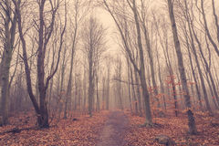 Mist in the forest at autumn Royalty Free Stock Photography