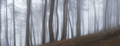 Mist and forest early morning Stock Photography