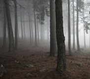 Mist in the Forest Royalty Free Stock Image