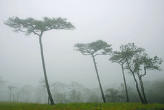Mist forest landscape. Mist forest of mountain view Royalty Free Stock Photography