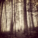 Mist in forest Royalty Free Stock Photos