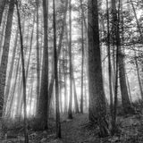 Mist in forest Royalty Free Stock Images