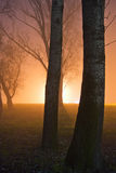 Mist in the forest at night Stock Image