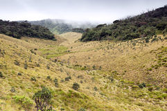 Mist Forest, savanna, and clouds at Horton Plains Royalty Free Stock Photos