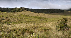 Mist Forest, savanna and clouds at Horton Plains Royalty Free Stock Photo