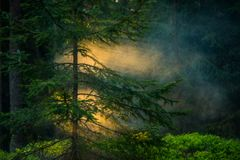 Mist in forest and sun light stock photos