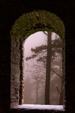 Mist forest trees stone window Stock Photos