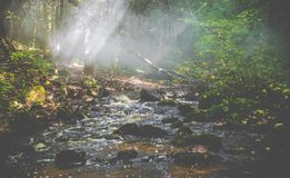Mist in forest and water stock images