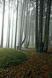 Mist in the forest Stock Image