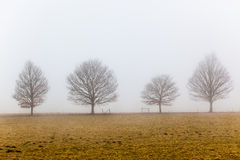 Mist Four Trees Landscape. Four trees silhouette against the morning gray mist with  a gate opened lining  across the picture frame Photo image giving the cold Stock Images