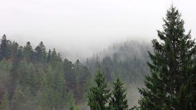 Mist in geheimzinnigheid bos stock footage