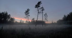 Time lapse of mist in the forest. Mist gently moving through an opening in a forest with a group of tall trees time lapse stock footage