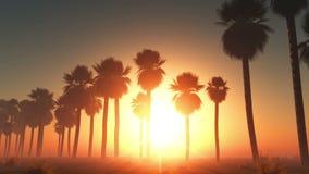 Mist gloeiende zon en palmen stock footage