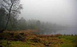 Mist on Grass and water Stock Images