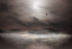 Mist and Gull. Flying sea gull and haze Royalty Free Stock Photos