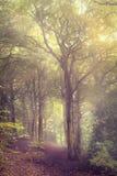 Mist in het bos Stock Afbeeldingen